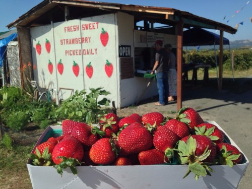 Fresh Watmaugh Strawberries