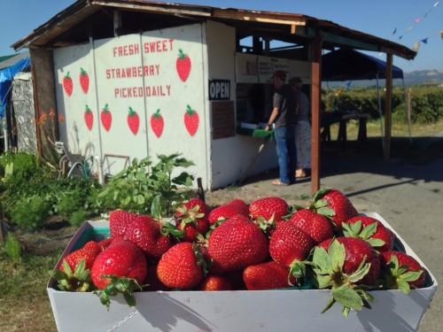 Fresh Watmaugh Strawberries